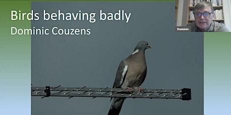 RECORDING: Birds Behaving Badly – Dominic Couzens tickets