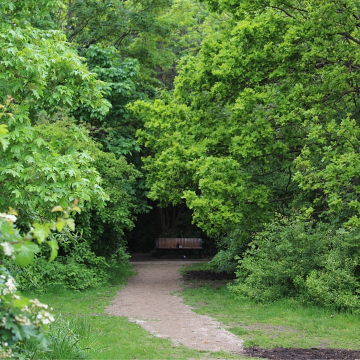 Health & Nature - a gentle walk through the woodland in Cally Park image