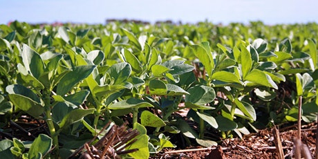 Optimising post-emergent herbicides tickets