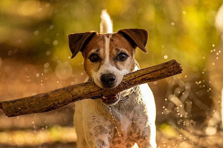 """Online Workshop """"Hundefotografie für Einsteiger"""": Bild"""