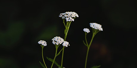 Native Plants in Brewing and Distilling tickets