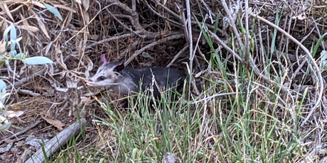 Wildlife  in the Garden tickets