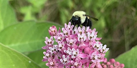 Attracting Songbirds and Pollinators with Native Plants tickets