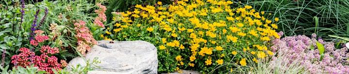 Become an Extension Master Gardener Volunteer – Stokes County image