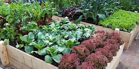 'Harewood Get Growing' Vegetable Growing Class tickets