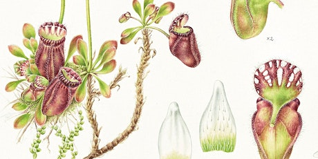 Artists Talk : The journey of a botanical painting with artist Lauren Black tickets