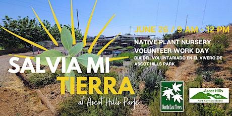 Salvia Mi Tierra - Ascot Hills Park Nursery Volunteer Day tickets