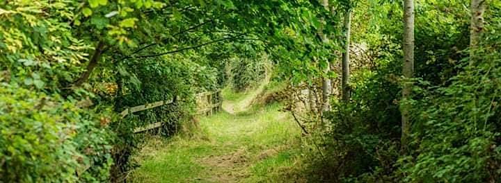 Foraging Walk & Wild Teas Workshop image