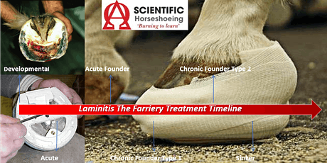 Laminitis; Understanding the Farriery Treatment Timeline tickets