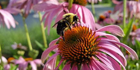 Learn about Wildflowers for Pollinators, Bees, and Beekeeping tickets