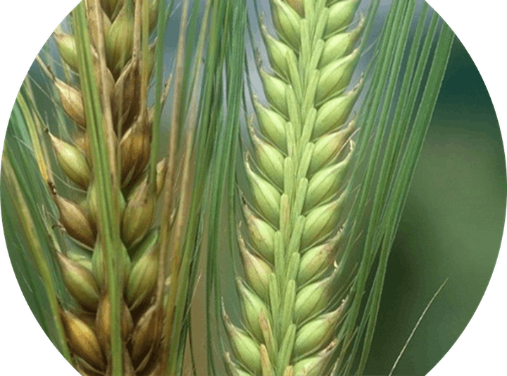 2021 Barley U image