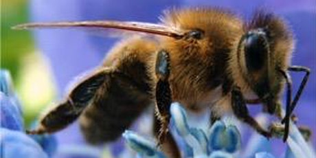 Year Round Varroa Mite Management:  Keeping Your Hive Healthy tickets
