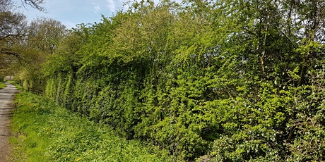 ONLINE TALK Hedge Laying History tickets