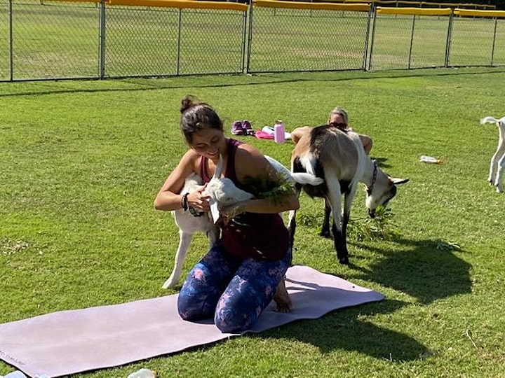 Goat Yoga in the Winery image