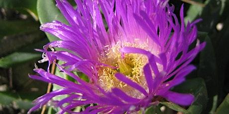 NaturallyGC Grow me Instead - Create a habitat garden tickets