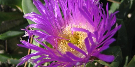 NaturallyGC Grow me Instead - Create a shade garden tickets