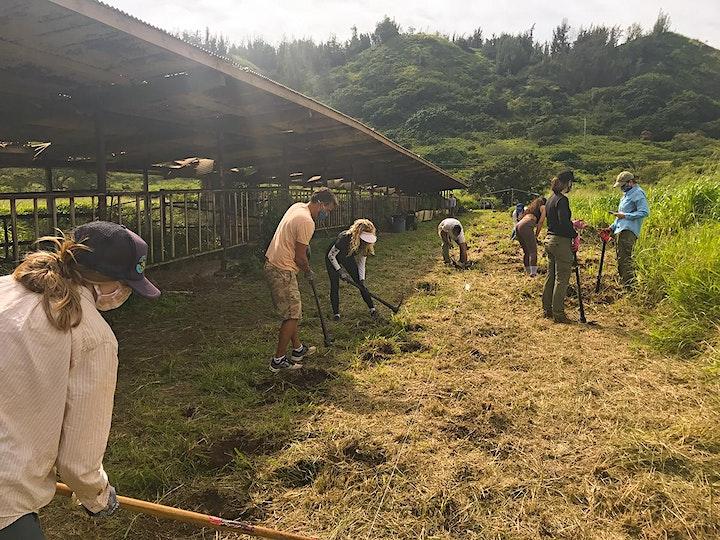 Waialeʻe Volunteer Workday image