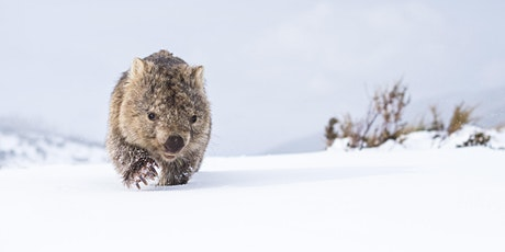 Photographing Wildlife with Wide-Angle Lenses | Charles Davis tickets