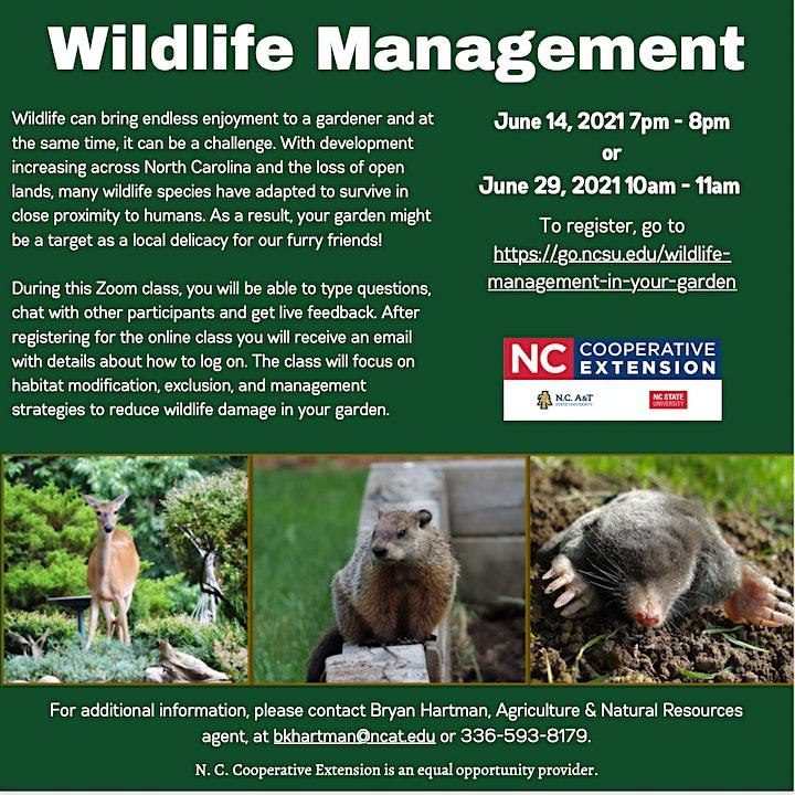 Wildlife Management in Your Garden image