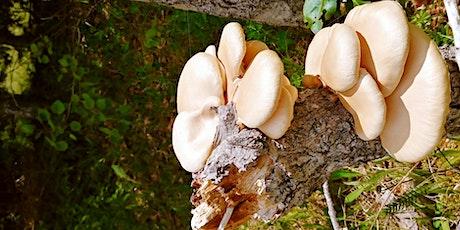 Initiation à l'identification et à la cueillette des champignons forestiers billets