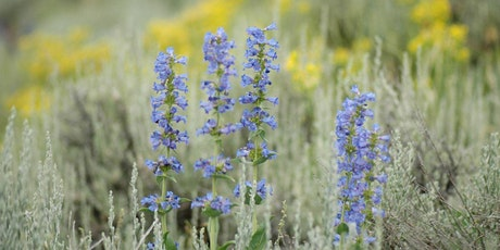 Wildflower Hike tickets