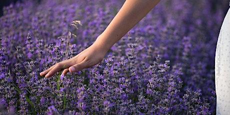 A morning in the lavender field biglietti