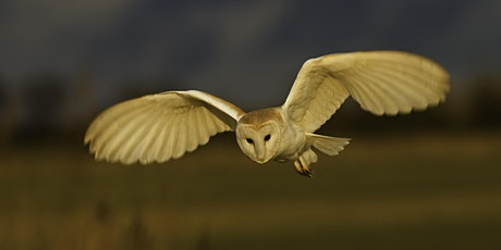 Wild Weekends: Suffolk Big 6 - barn owl at Bradfield Woods tickets