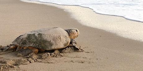 EAI's 2021 Sea Turtle Walks tickets