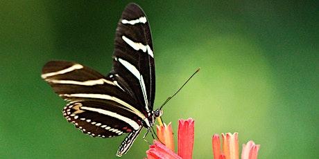 Butterfly Garden Tour with a Master Gardener Volunteer tickets