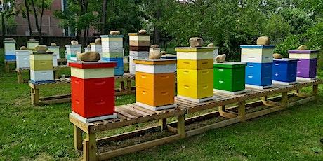 Urban Beekeeping tickets