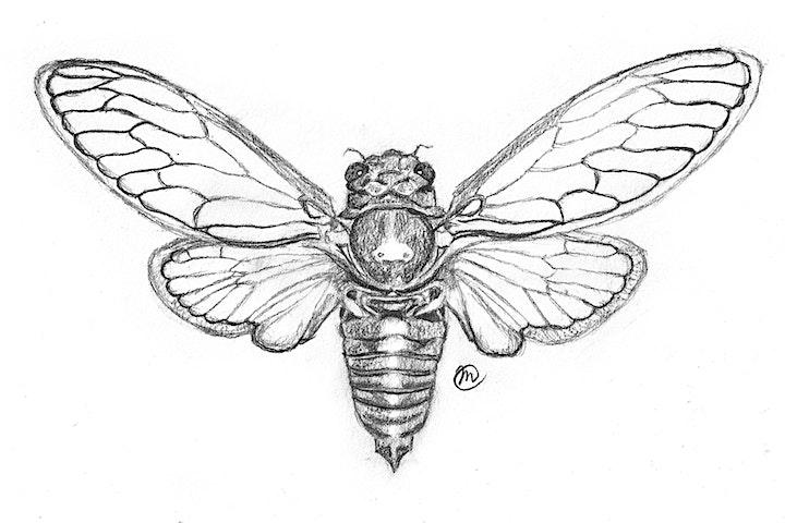 Art & Evolution: Drawing Animals w/ Megan McGrath image