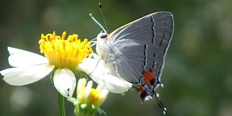 Planting a Pollinator Garden tickets