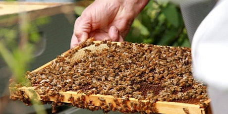 IN PERSON! Beginning Beekeeping: The Basics and Focus on Urban Beekeeping tickets