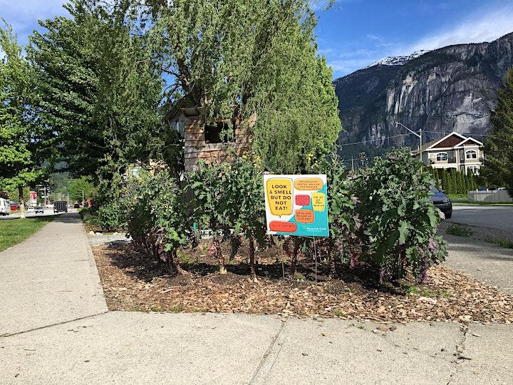 Downtown Squamish Jane's Walk: June 12-19, 2021 image