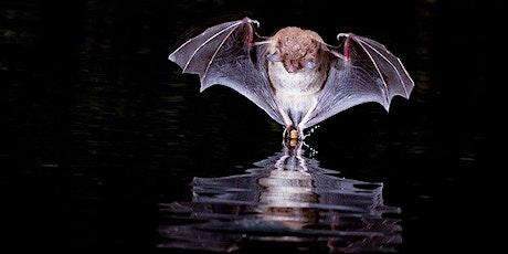 Fieldfare Bat Safari - Hemingford Abbots tickets