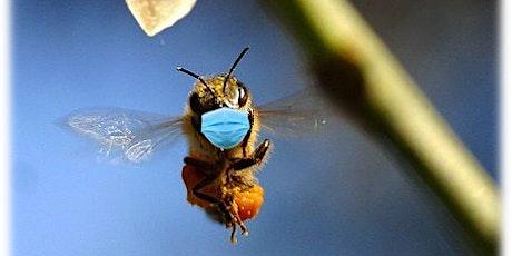 Breeding for Hygienic Bees - a talk by Jack Silberrad tickets