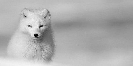 Fjällräven - Arctic Fox Initiative 2021 - Webshow and Live Q&A tickets