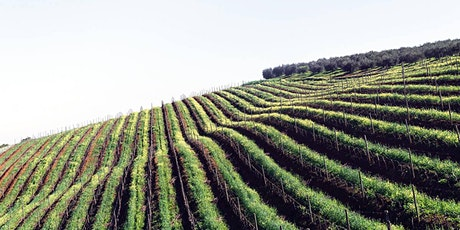 Italiensk vinprovning Stockholm | Gamla Stans Vinkällare Den 13 June tickets