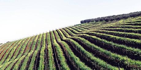 Italiensk vinprovning Stockholm | Gamla Stans Vinkällare Den 18 September tickets