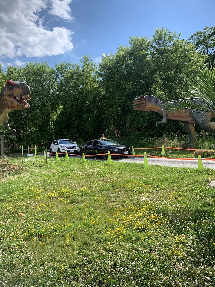 Dinosaur Drive-Thru June 16th: COVID 19 Safe image