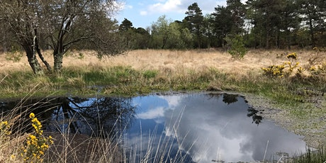 Behind the Scenes at RSPB Arne Guided Walk tickets