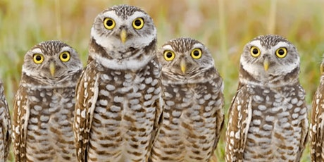 Read Watch Do: East Bay Regional Parks and Owl Pellets tickets