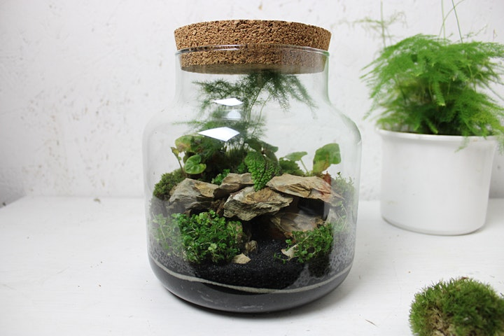 Terrarium Workshop with Ome image