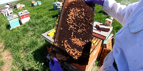 Honey Bee Diseases Identification And Management tickets