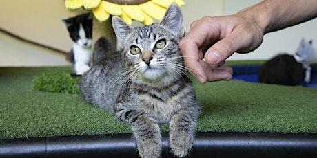 Cat-O-Rama: Adoption Event tickets