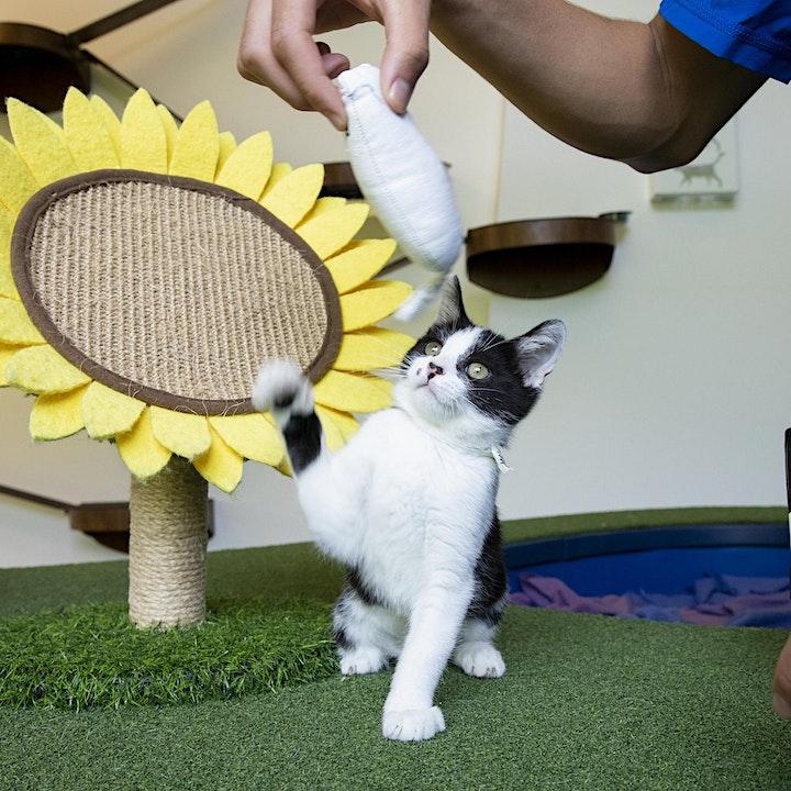 Cat-O-Rama: Adoption Event image