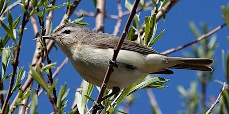 Birding by Ear Hike: Upper Hulls Gulch tickets