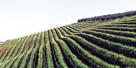 Italiensk vinprovning Stockholm | Gamla Stans Vinkällare Den 04 September tickets
