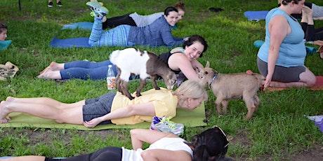 Adult Goat Yoga! - 6/19 | 6pm - 7pm | tickets