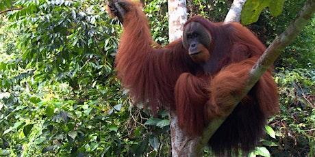 Beers for Orangutans tickets